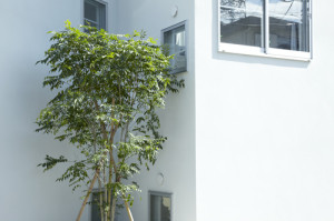 house-in-tokyo-suburbia_ota_05